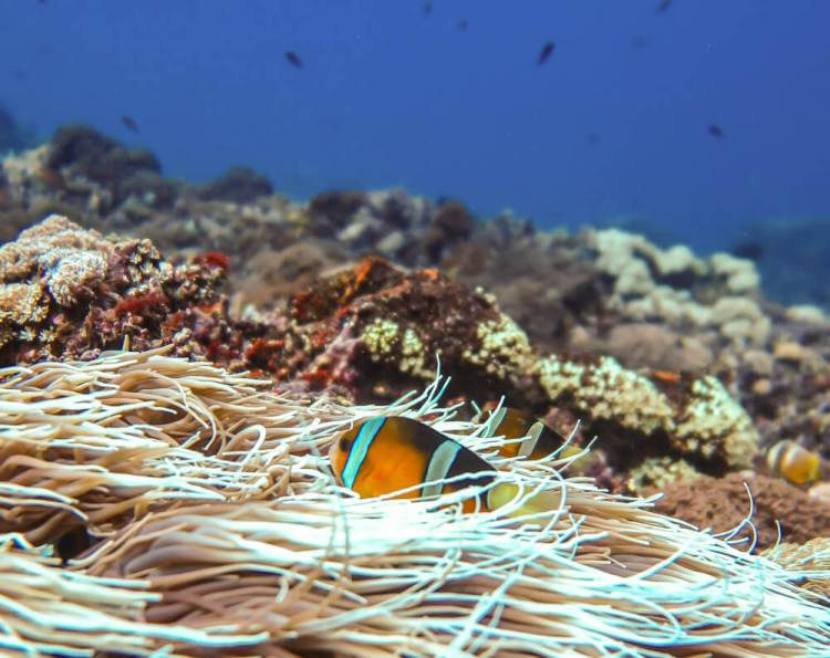 Waterdichte zak snorkelen