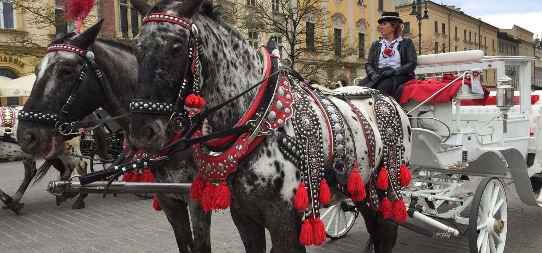 Paarden Krakau