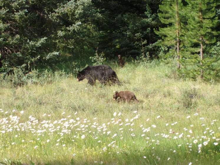 Wild spotten in Canada