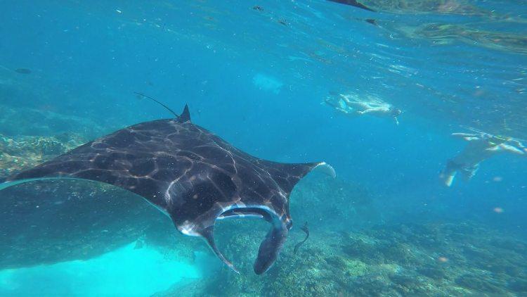 Snorkelen met manta's