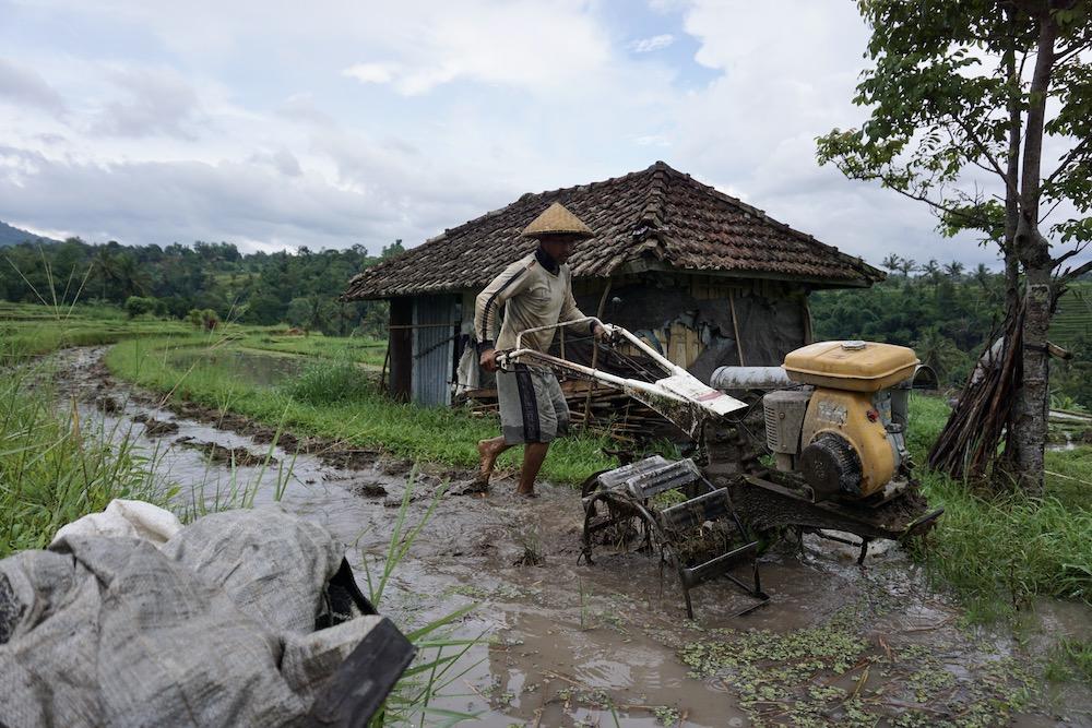 Jatiluwih rijstvelden Bali Indonesië