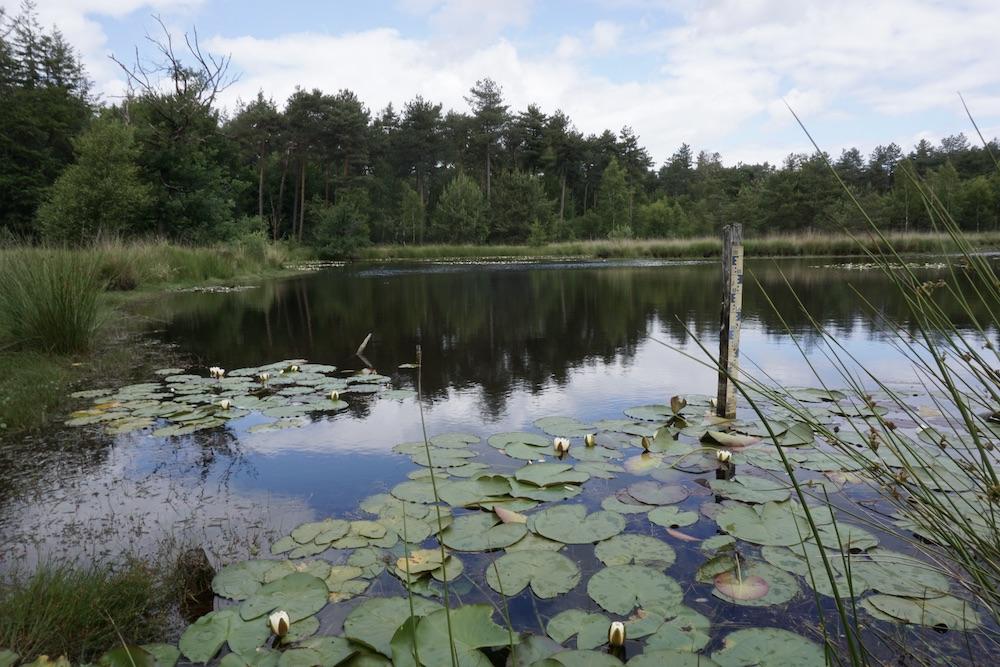 Wandelroute Oisterwijkse Bossen en Vennen Noord-Brabant Nederland