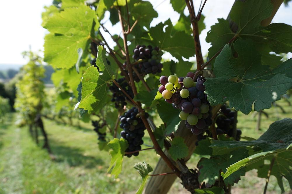 Route des Vins Zuid-Limburg Nederland