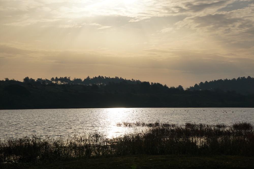 Vogelmeer Nationaal Park Zuid Kennemerland Nederland