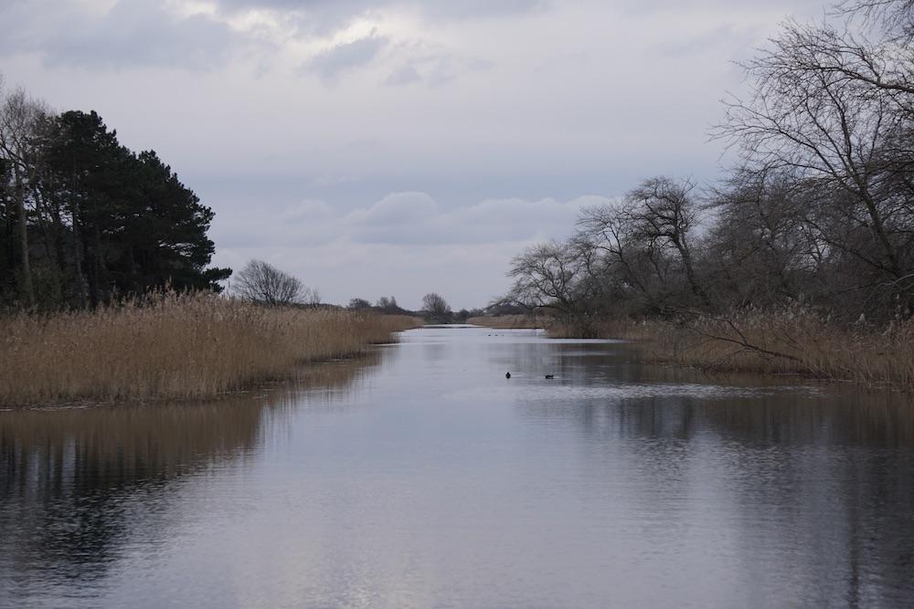 Wandelen Amsterdamse Waterleidingduinen Zandvoort