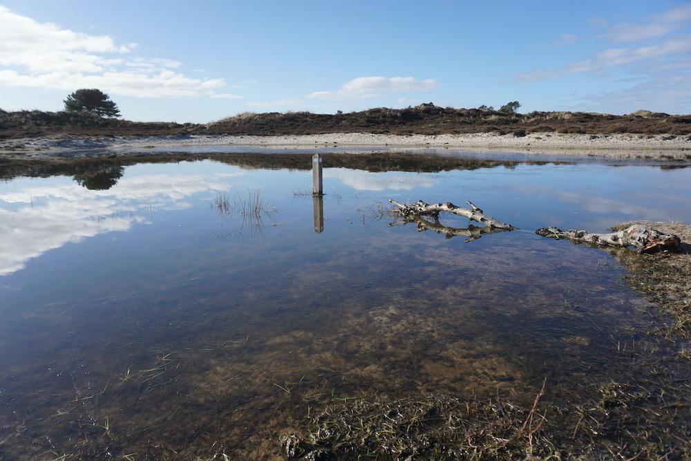 Vogelmeer Schoorl
