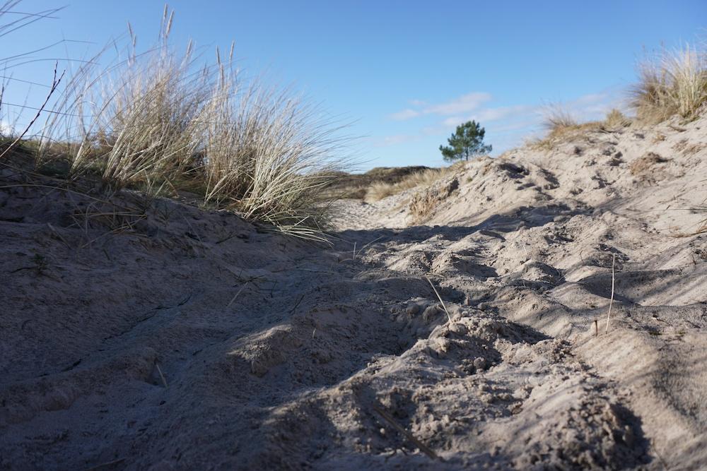 Wandelen duinen Schoorl
