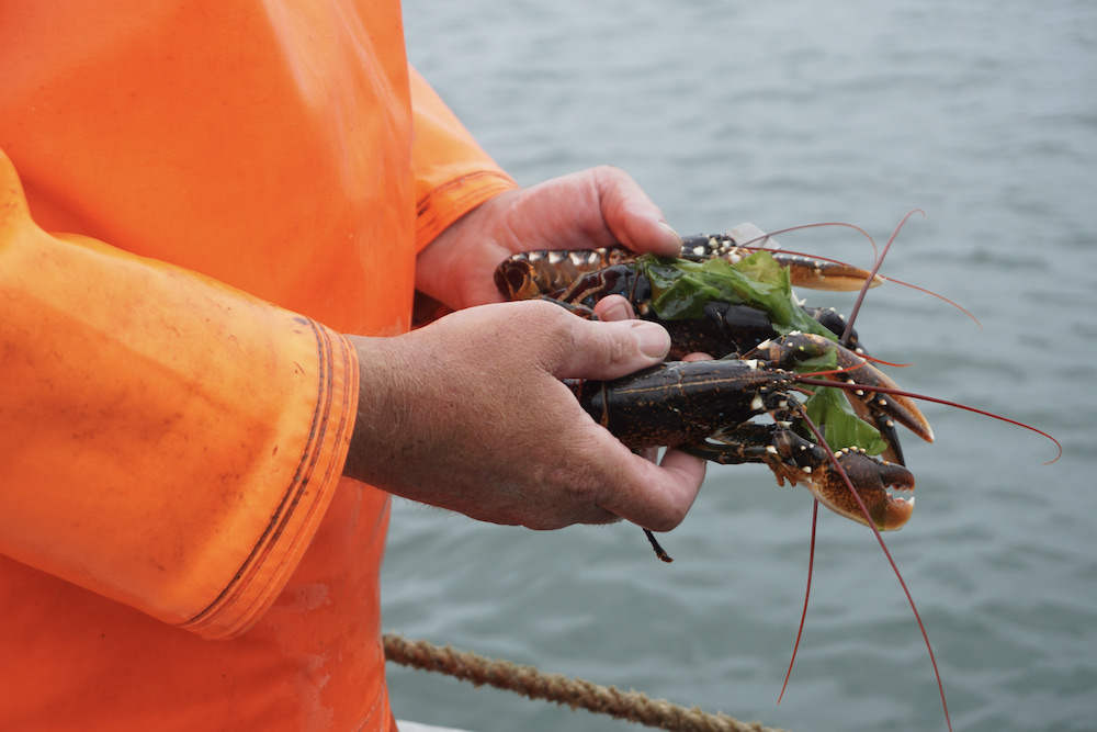 Kreeftenvisser Oosterschelde Zeeland
