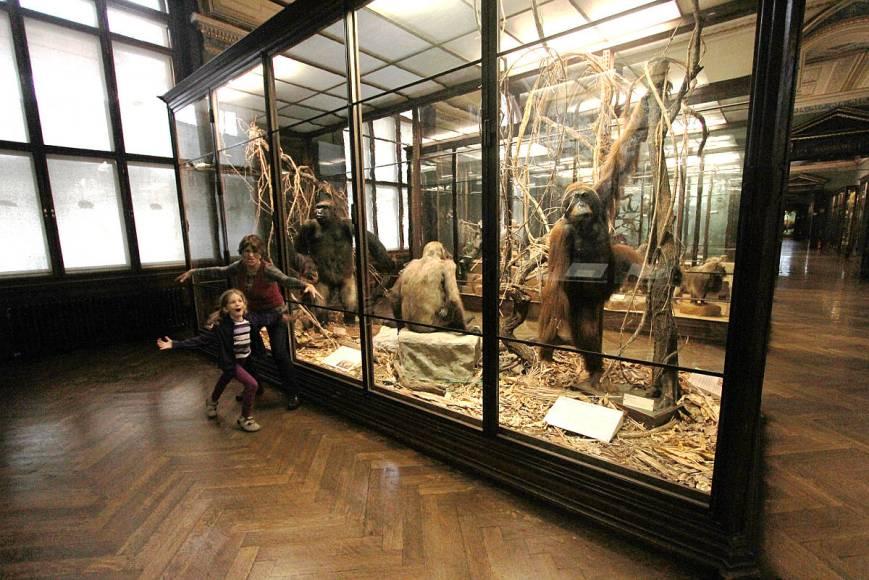 natural-history-museum-vienna-2722