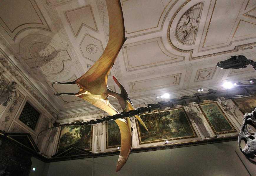 natural-history-museum-vienna-2742