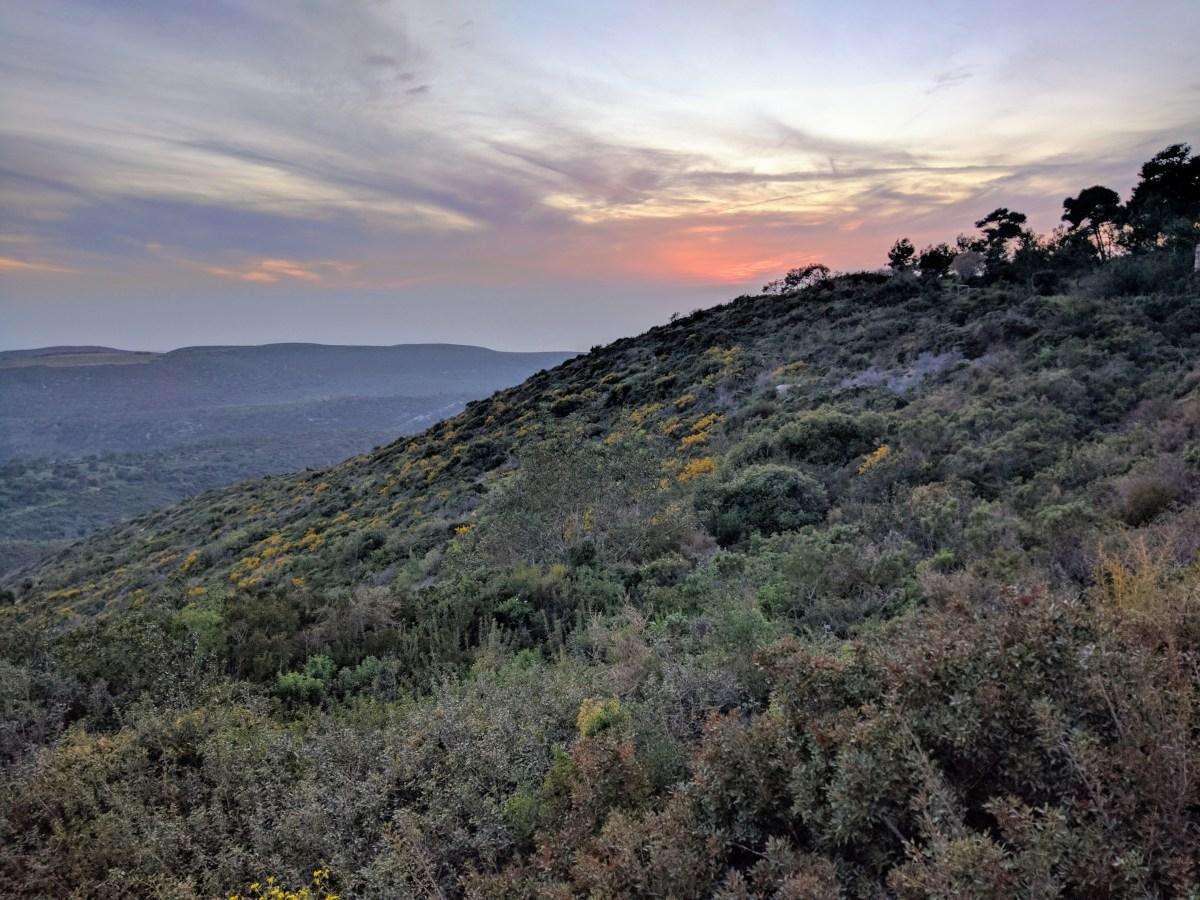 Spring Comes to Haifa
