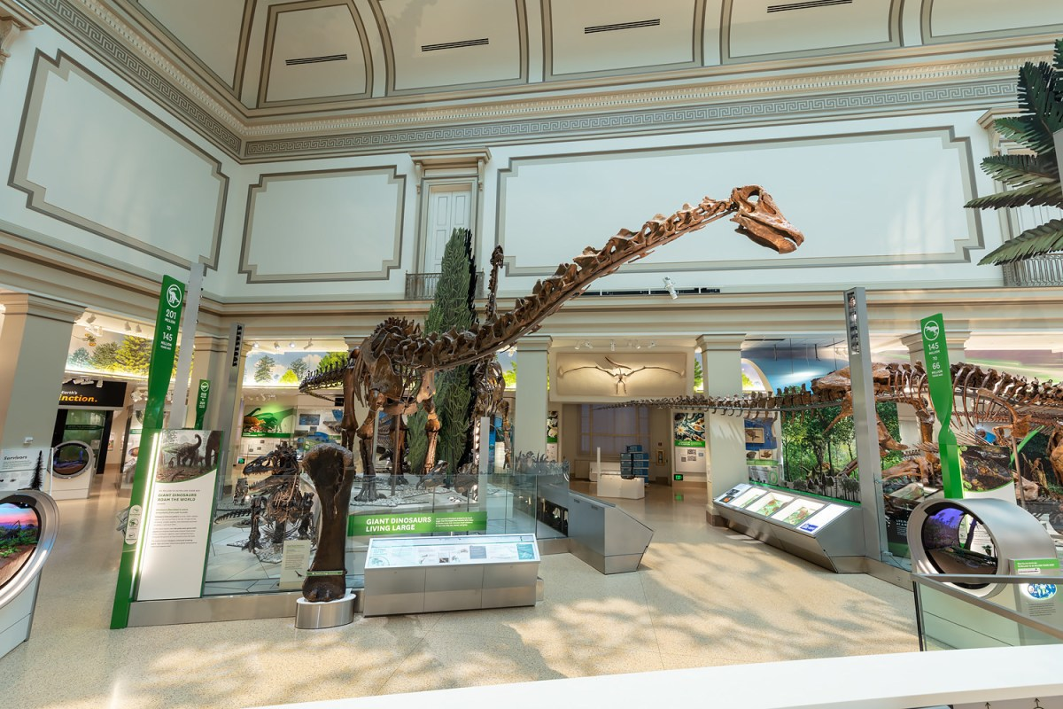 Smithsonian National Museum of Natural History's Dinosaur Hall Restored to its Original Grandeur