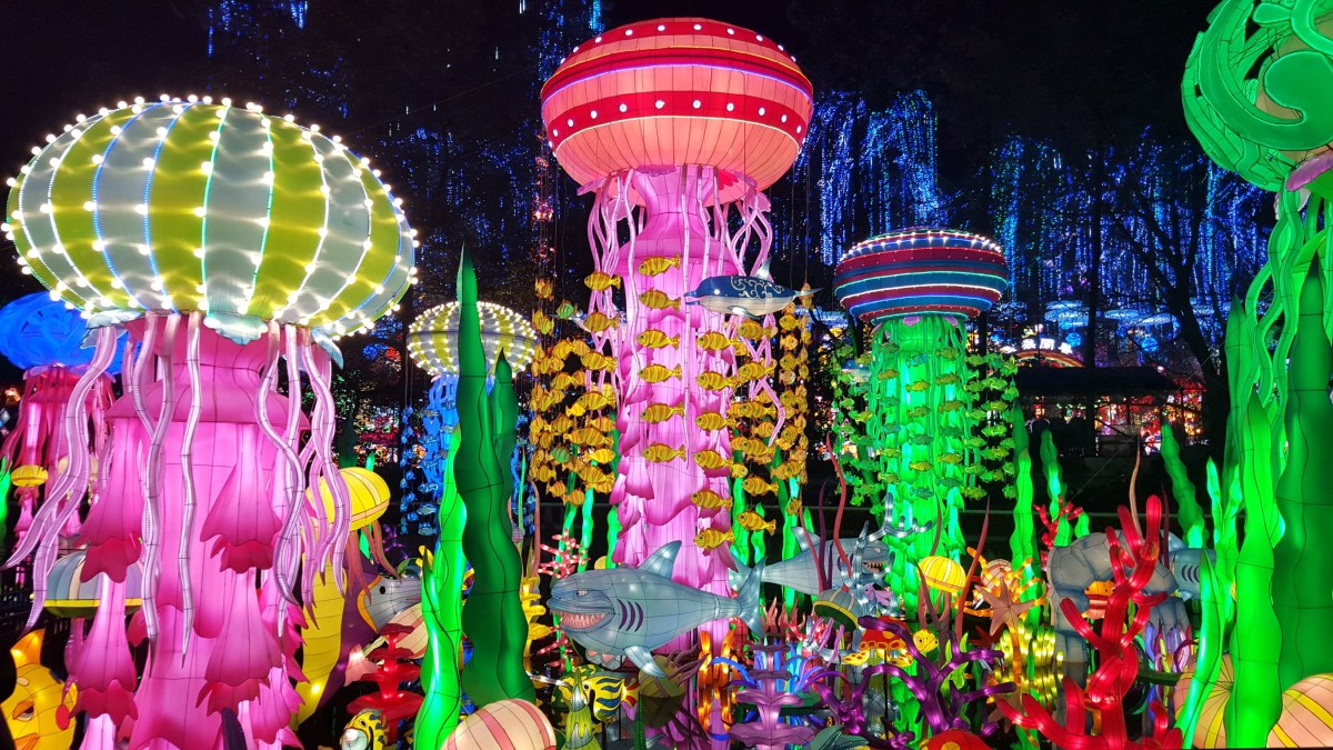 Illuminated Jellyfish at Luminosa