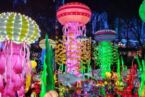 Jungle Island Takes Spotlight in Miami with Luminosa Festival Of Lights from October 5, 2019 – January 8, 2020