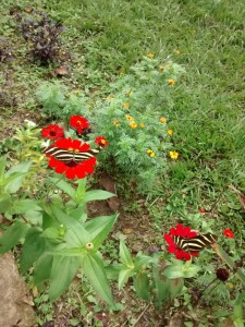 Spielplatz für Schmetterlinge