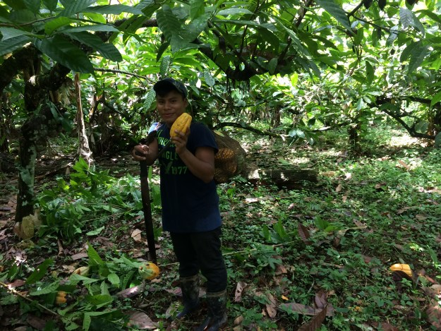Chiky is harvesting by machete, it is the most useful equipment at the farm.