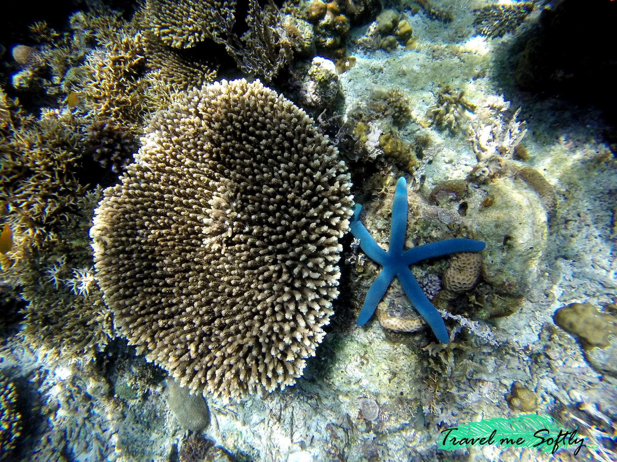 arrecifes de coral bucear en filipinas