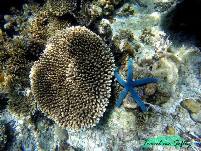 Itinerario de viaje por Filipinas_corales