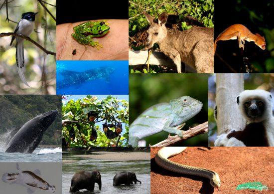 popurri viaje animal