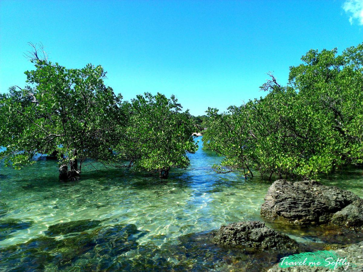 ¿Sabes cuáles son los Países Megadiversos?