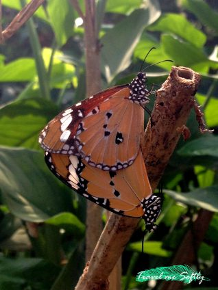 Puerto Princesa mariposas