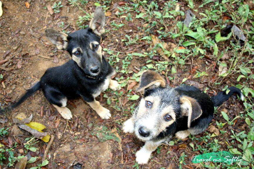 cachorros en Madagascar