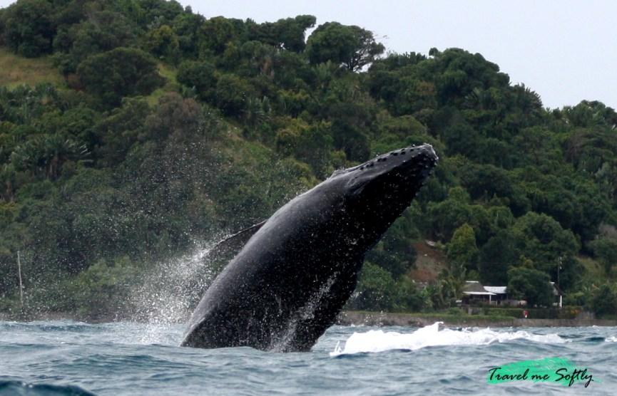fotografía de viajes ballenas