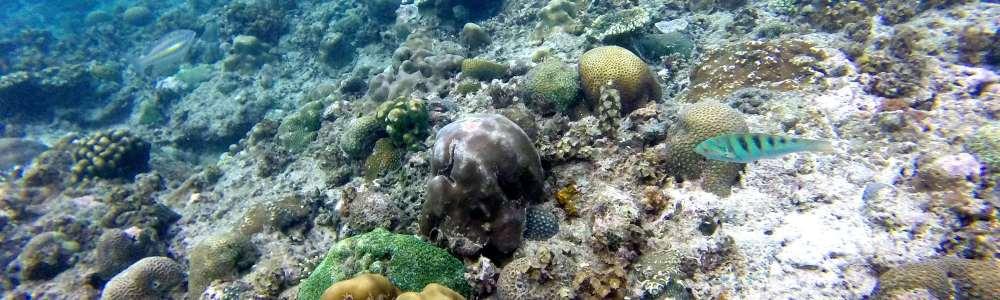 Island Hopping El Nido: Descubre el Archipiélago de Bacuit
