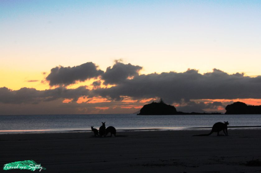 Cape Hillsborough Nature Tourist Park