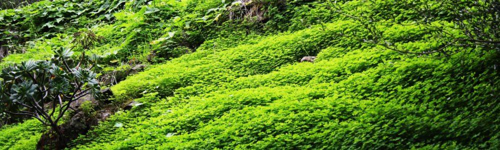 Mitos y cuestiones que deberías conocer si viajas a las Islas Canarias