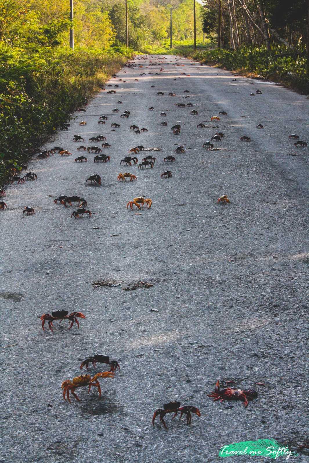 migracion del cangrejo rojo en cuba