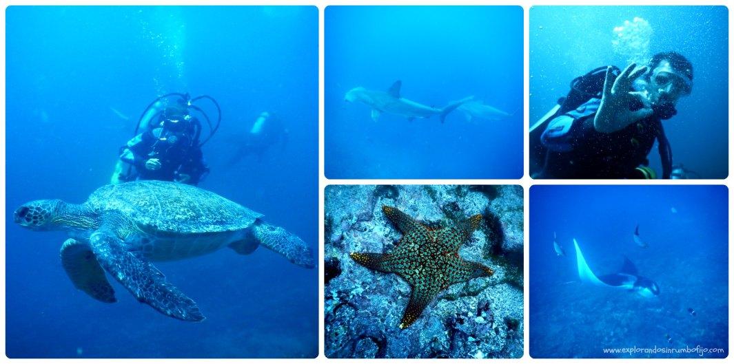 Buceo Galápagos animales salvajes