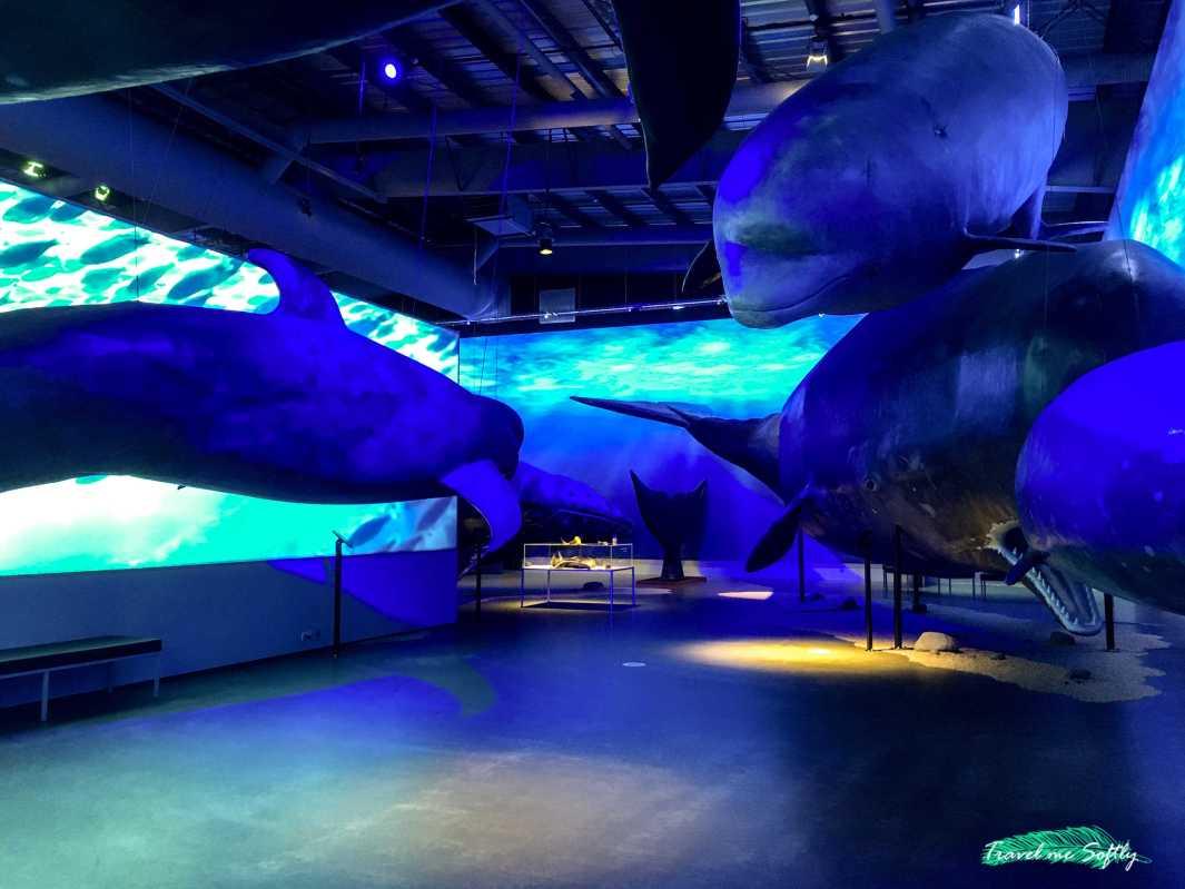 qué hacer en reikiavik whales of iceland