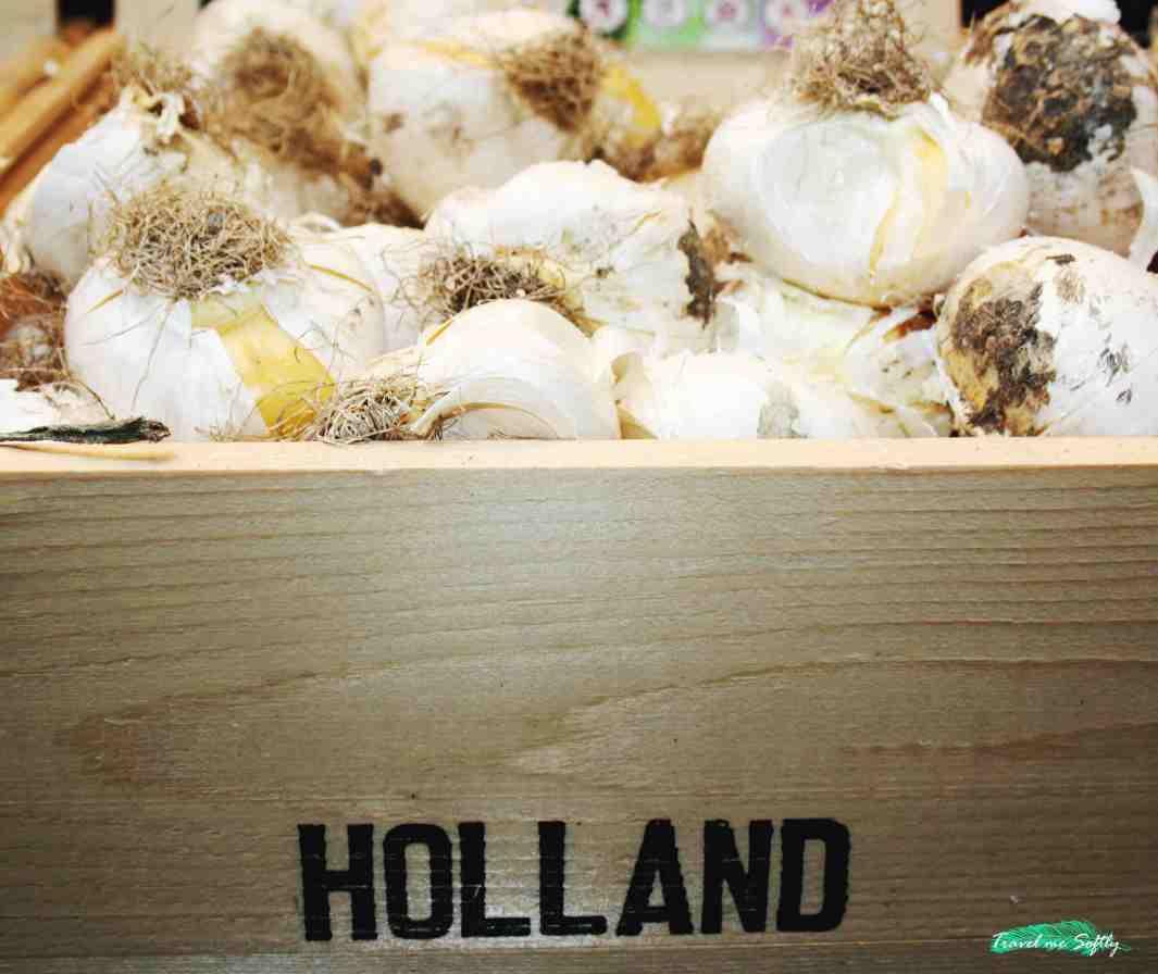 holanda bulbos blancos dormir en amsterdam