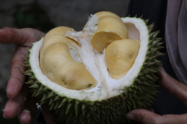 durian multas singapur
