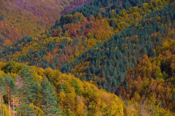 bosques de españa para disfrutar del otoño irati
