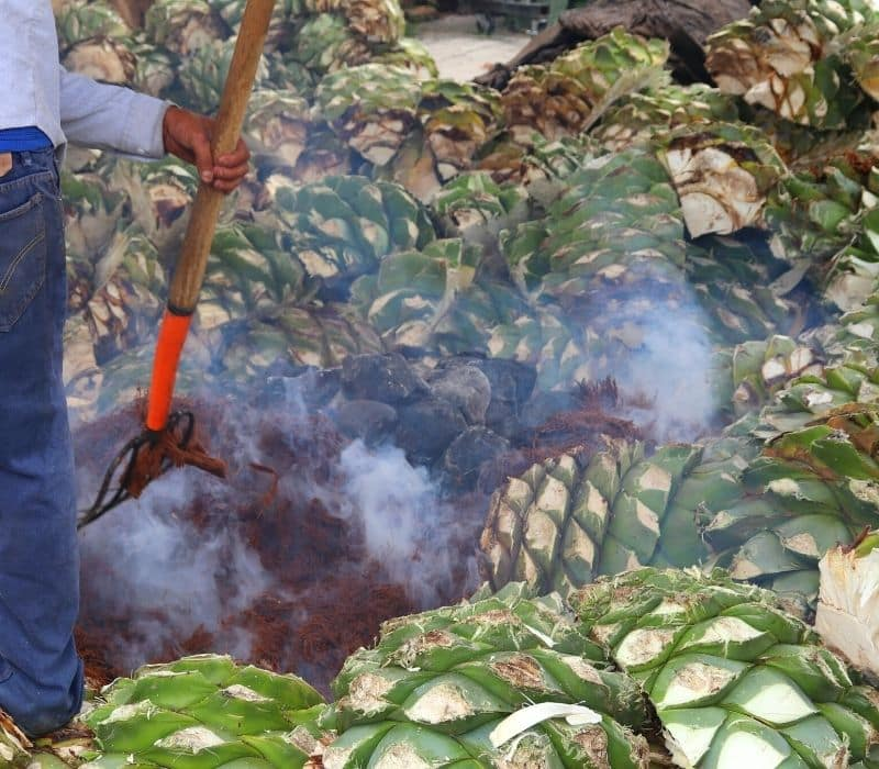 man cooking agave plant