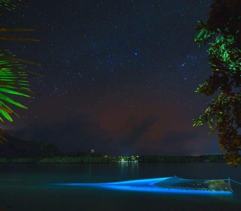bioluminescent bay glowing blue at night