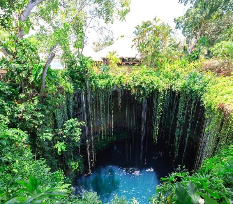 cenote swimming hole with vines hanging down into it