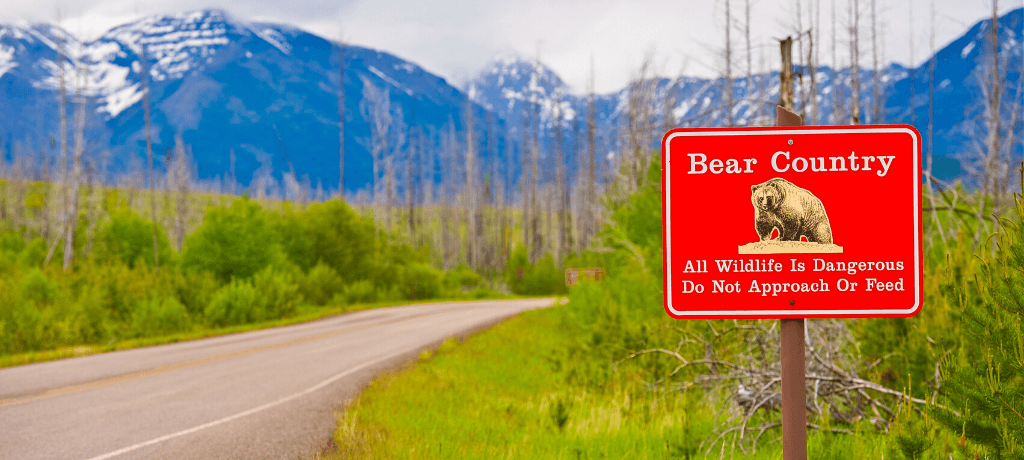 Bear Country sign by a mountain road