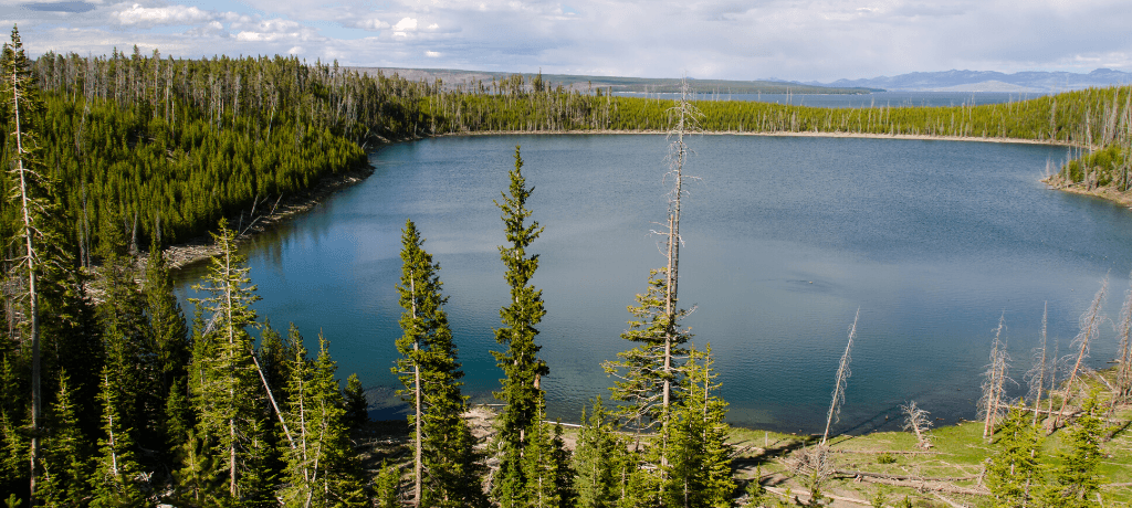 Serene Yellowstone Lake surrounded by pine trees in Yellowstone National Park