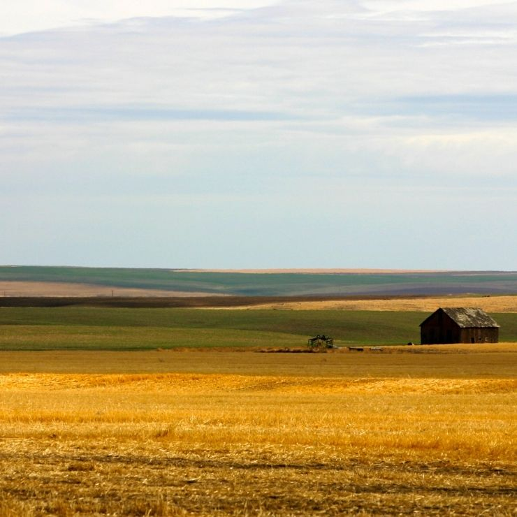 Golden farmland in Montana