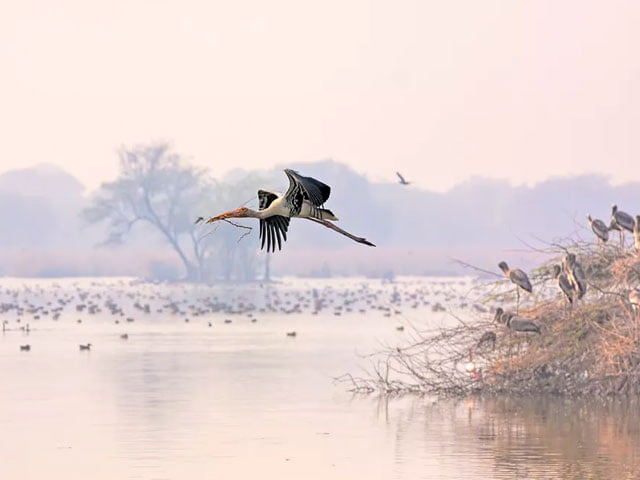 baratpur-bird-sanctuaries