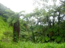 2-el-yunque-air-plants
