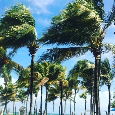 the palms are enjoying the beach breeze