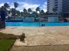 resident iguana enjoying the pool