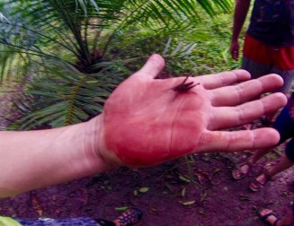 Cristian showing us plants that look like blood and some Costa Rican critters