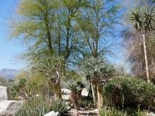 living desert plants 2 travelnerdplans