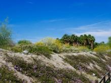 living desert plants and palms travelnersplans