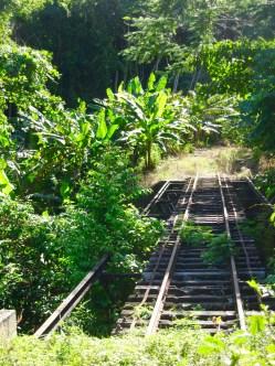 Old sugar train tracks